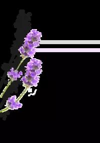 Ulei de Trandafiri
