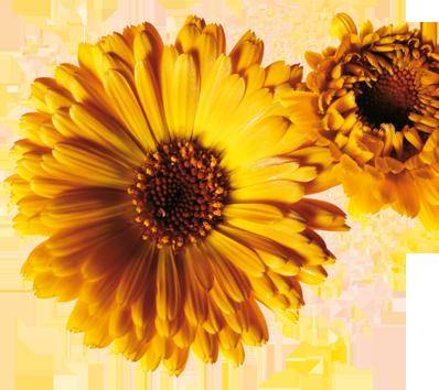 Lista de Plante și Mirodenii pentru Concediu