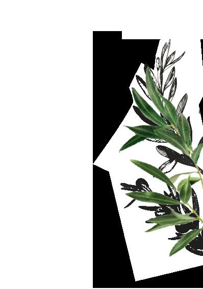 Frunze de Măslin