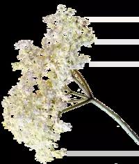 Fructe prețioase din Flora Spontană