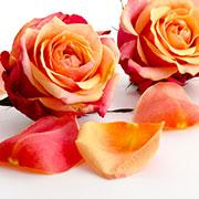 Flori de trandafiri | © SONNENTOR