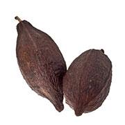 Păstăi de cacao | © SONNENTOR